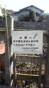 内田春菊の画像