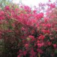 山咲まりなの画像