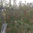 渡辺英樹の画像