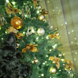 新堂冬樹の画像