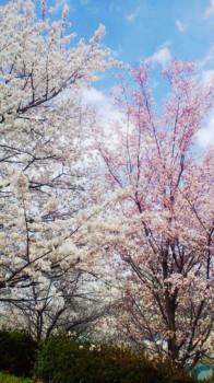 中村凛花の画像